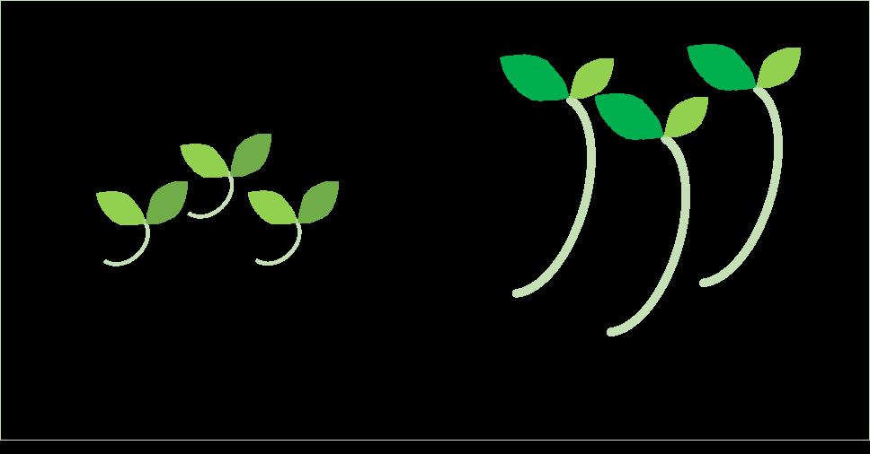 スプラウト収穫