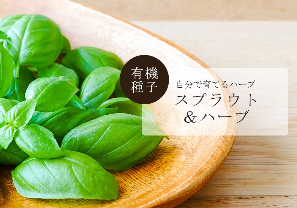 有機種子自分で育てるハーブスプラウト&ハーブ